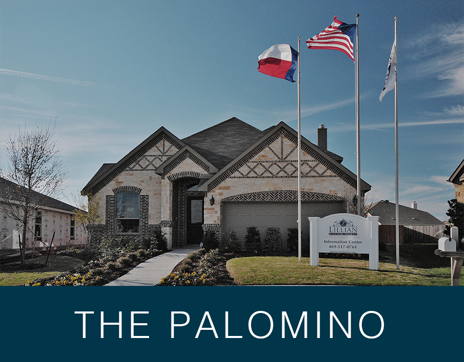 Palomino-VideoPreview.png